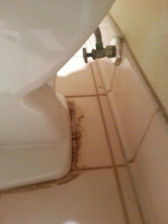 Holiday Inn Tampa Westshore:                   Dirty bathroom