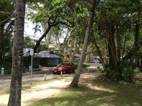 Palm Cove Beach:                   Williams Esplanade Palm Cove