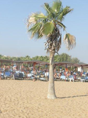 Sural Resort:                   Plaża