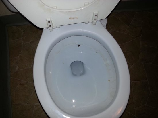 Stay Express Inn & Suites Sweetwater:                                     Huge Black Tick and the toilet never flushed!