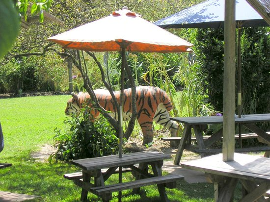 Jester House Cafe and Tame Eels:                                     Jester House Cafe - where big cats roam free
