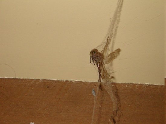 Northern Outdoors Adventure Resort:                   cobwebs and bugs........