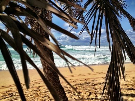 Oahu, HI:                   North Shore