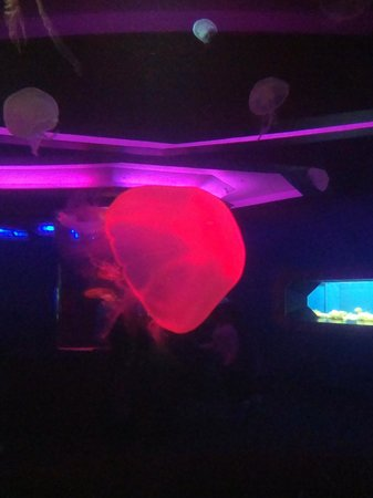 Newport Aquarium:                   Jellies