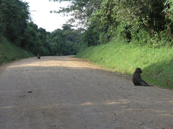 CVK Lakeside Budget Accommodation & Monkey Sanctuary:                   national park road
