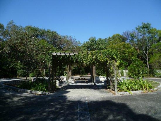 Key Largo Hammocks State Botanical Site :                   nice place to take a break