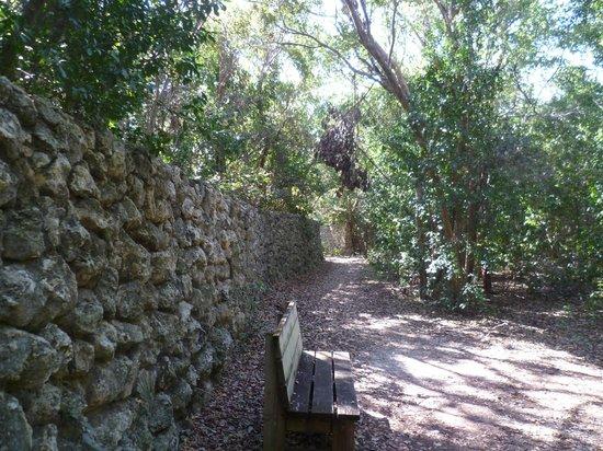 Key Largo Hammocks State Botanical Site :                   A wall on the trail
