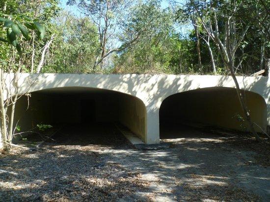 Key Largo Hammocks State Botanical Site :                   weird tunnel