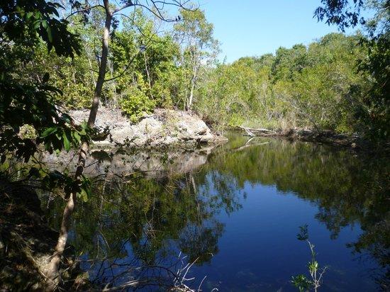 Key Largo Hammocks State Botanical Site :                   beautiful lake