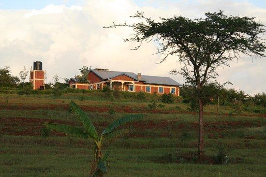 Tanzanice Farm :                   Tanzanice