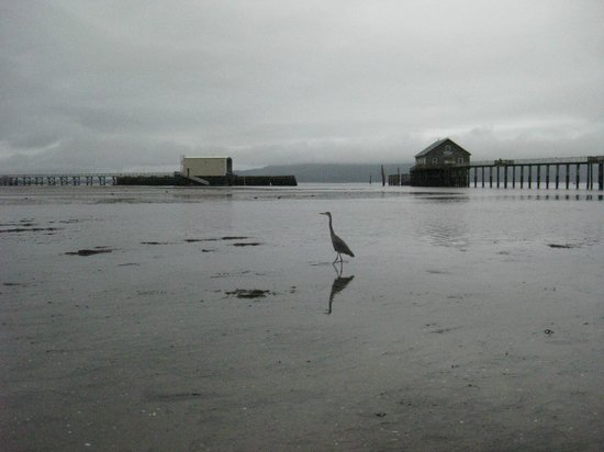 Harborview Inn & RV Park:                   While waiting for the tide to go out at the pier, a blue heron came right up t