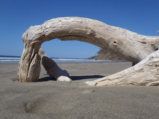 Hotel Punta Islita, Autograph Collection:                   Driftwood on the beach.
