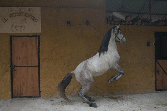 Rancho El Reencuentro: caballo blanco