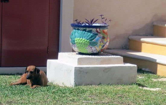 Flamingos Inn:                   Canela and potted plant
