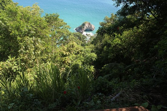 Bosque del Cabo Rainforest Lodge:                   View of cliffside below Congo deck--there be monkeys there!