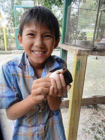 Animal Farm:                                     happy child holding 2 week old guinea pig