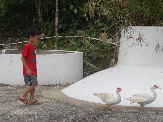 Animal Farm:                                     follow the leader