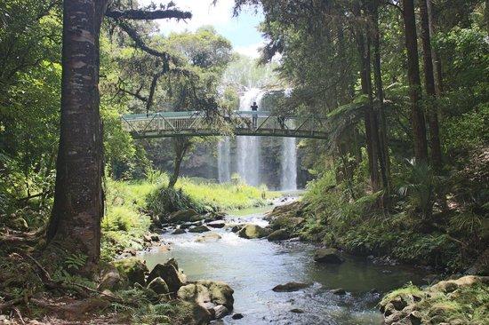 Kauri Villas:                   Whangarei Falls nearby
