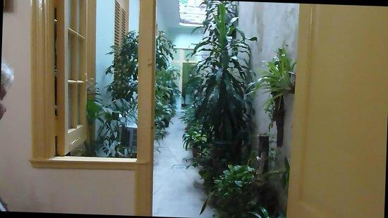 Cary y Nilo:                   plantes