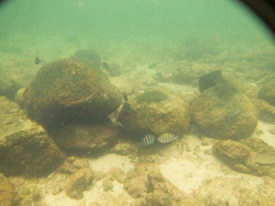 Aventureiro Beach :                   Playa Aventureiro snorkel