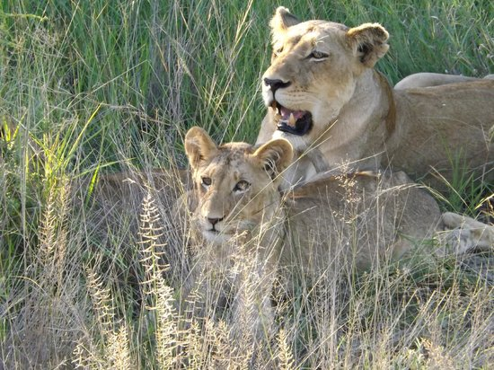Naledi Bushcamp and Enkoveni Camp:                   First day game drive