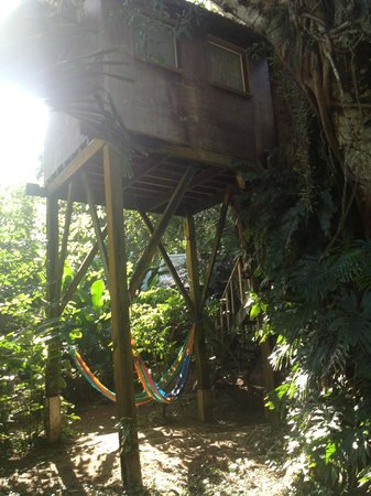 Parrot Nest Lodge :                   treehouse