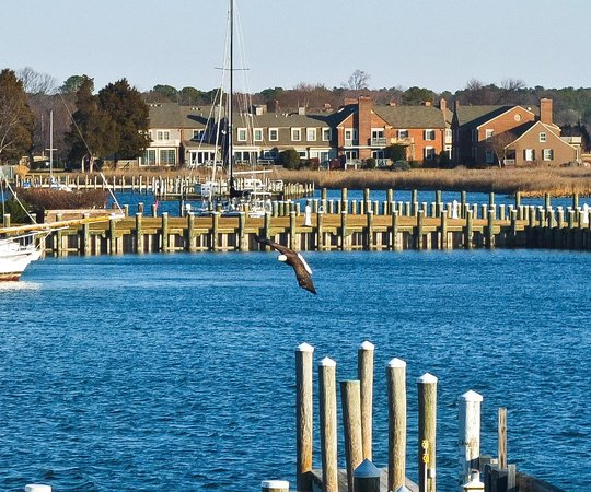 St. Michaels Harbour Inn Marina & Spa:                   What a surprise to see this eagle from our room!