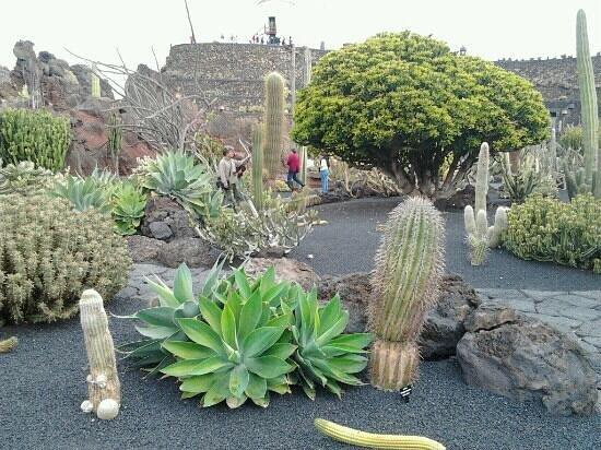 jardin de cactus picture of jardin de cactus guatiza tripadvisor. Black Bedroom Furniture Sets. Home Design Ideas