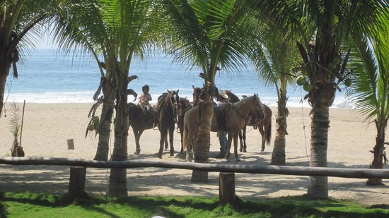 Casa Kau-Kan:                   Horses pick you up right at the hotel for a beach ride