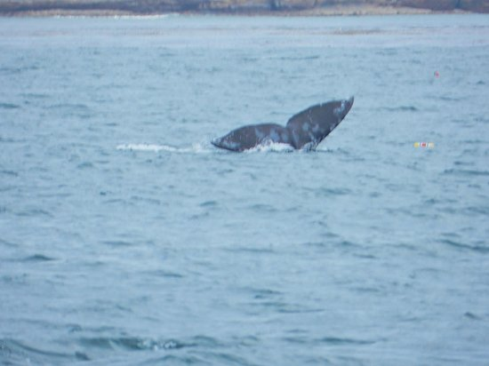 Next Level Sailing :                                     One of the whales we saw