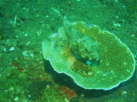 Sea Dragon Dive Center:                   8