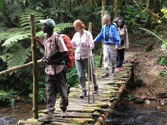 Nkuringo Bwindi Gorilla Lodge:                   Birding in Bwindi