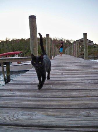 Lubber's Landing:                   Speedo the cat giving us a proper send off!