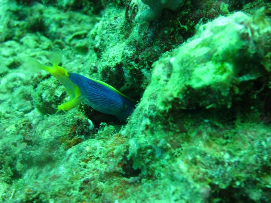 Uprising Beach Resort:                   blue ribbon eel