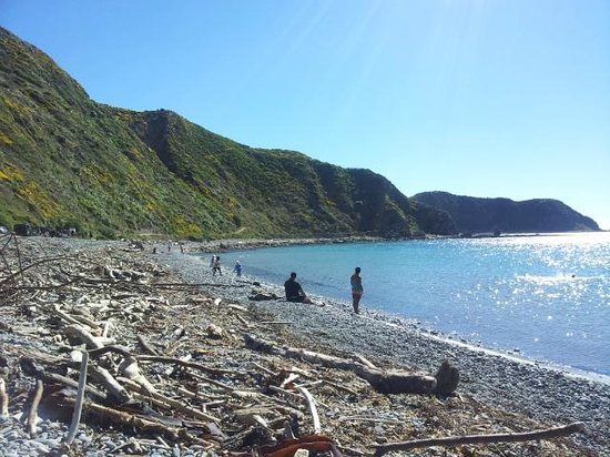 Makara Beach:                   Great Views