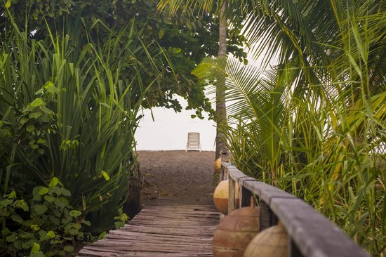 Guaria de Osa Ecolodge:                                                       Path out to the beach!