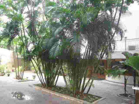 Hanu Reddy Residences,Wallace Garden :                   Lawns at Hanu Reddy Residences