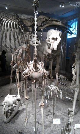 Natural History Museum (Luonnontieteellinen Museo):                   natural history museum