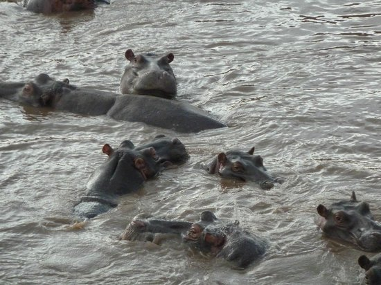 Kilima Camp:                   Hippos taken on hot air balloon flight