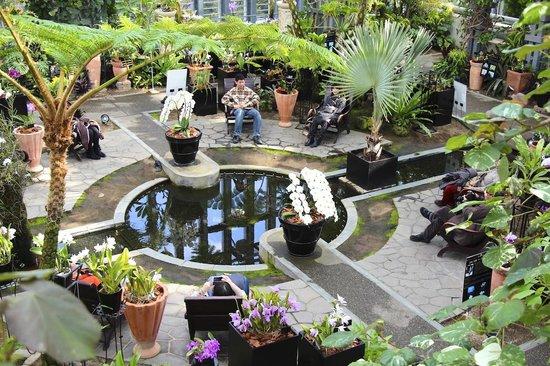 Awaji Yumebutai:                   淡路夢舞台温室 奇跡の星の植物館