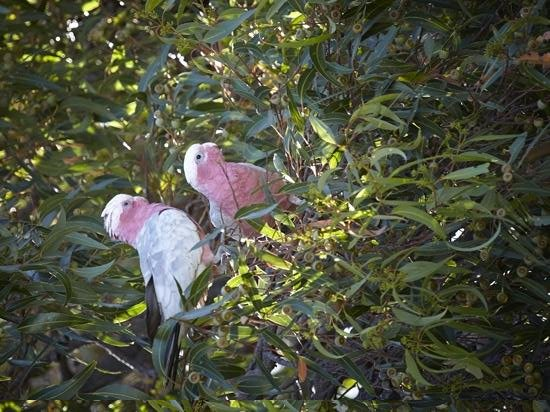 Llewellin's Guest House:                   birdlife in the garden.