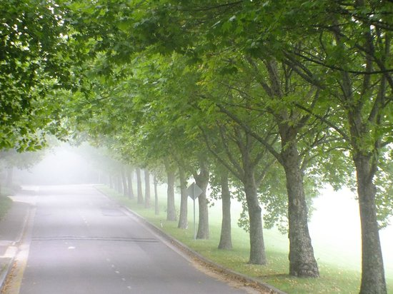Fairmont Resort Blue Mountains - MGallery Collection:                   Misty morning on entry drive