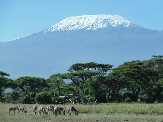 Tawi Lodge:                   Mount Kili from mboseli national park