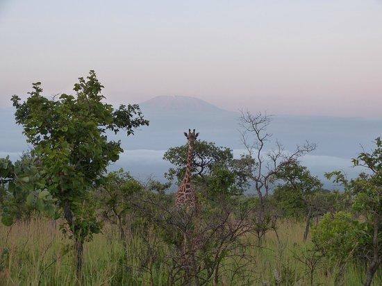 Swahili House:                                     Il mattino dalle collineCuhyu