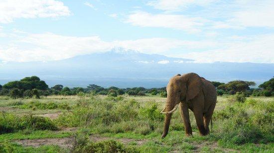 Mombasa, Kenia:                   Beautiful morning by Kilimanjaro