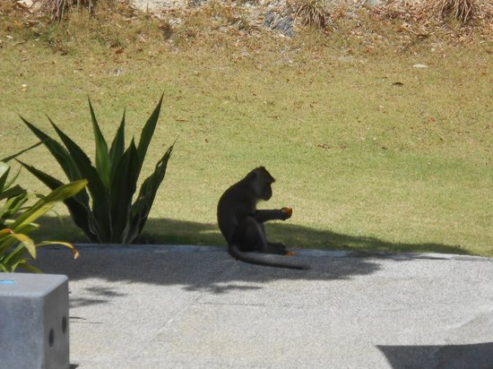 The Houben Hotel ( Adult Only ):                                     Monkeys stealing fruit!