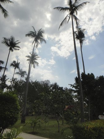 Lanta Resort:                   Nice Palm Trees