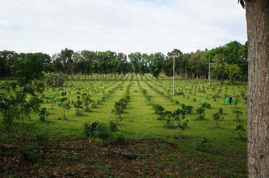 The Farm at San Benito:                   Coffee Beans