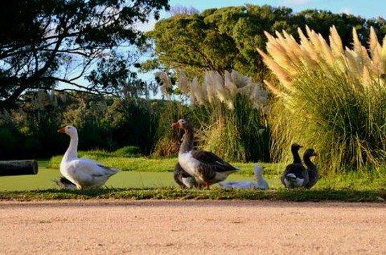 Hotel Parque Oceanico:                   En los jardines del hostal.