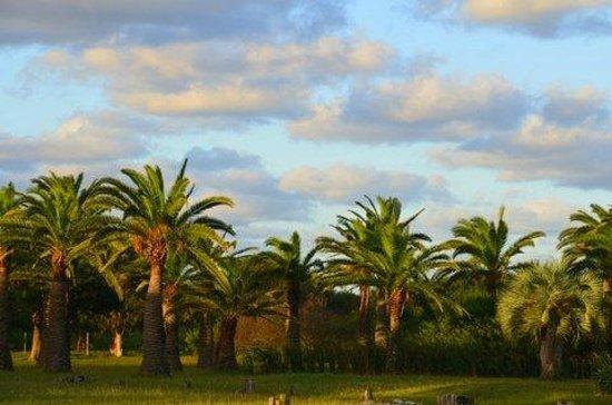 Hotel Parque Oceanico:                   Las palmeras del jardín